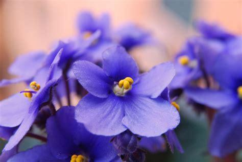 violetta fiori accademia profumo associazione di aziende cosmetiche