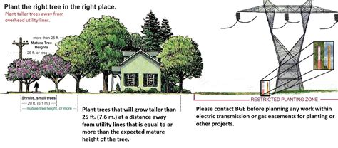 plant the right tree in the right place baltimore gas