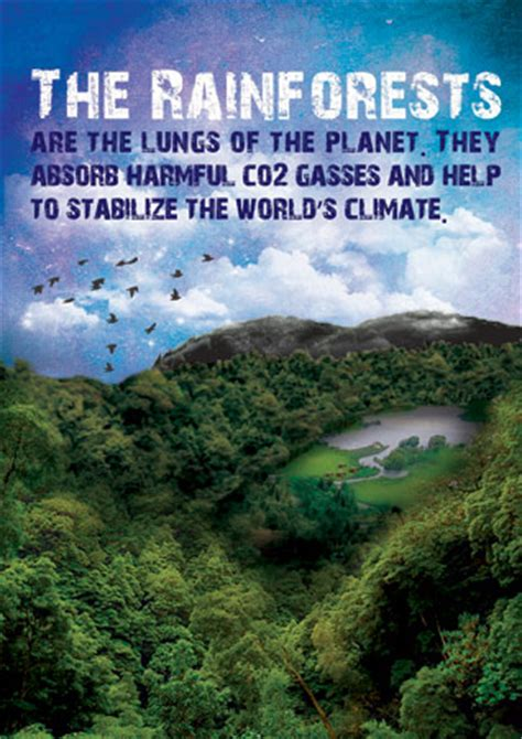 early learning resources rainforests poster