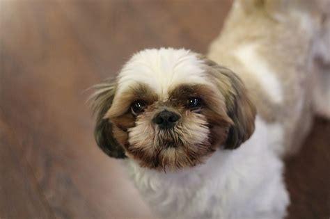 constipated puppy 3 weeks dogalize il pet social network per il tuo e gatto