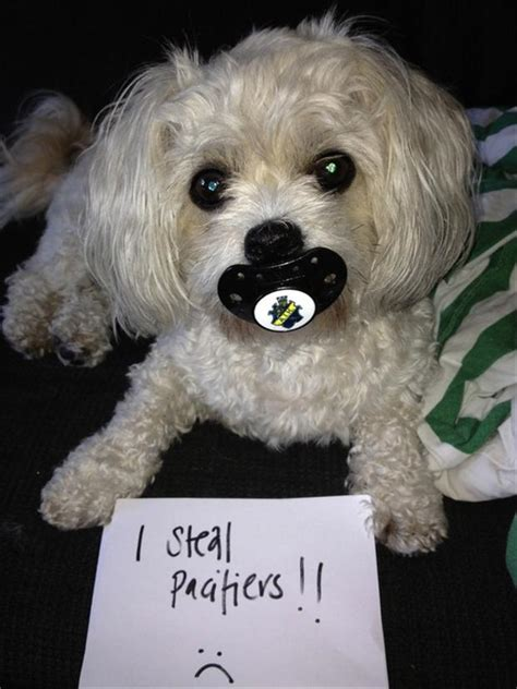 silly dogs shaming dogs dump a day