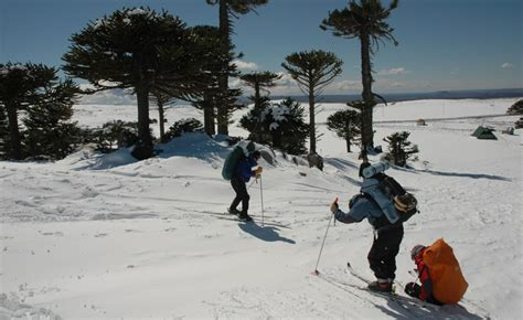 just monkeying around ski coaches hang from trees wearing primeros pinos snowpark