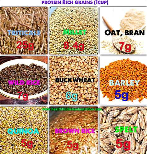 whole grains with high protein grains list