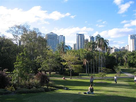 tree brisbane city city botanic gardens