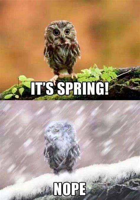 Funny Spring Memes - 8 best images about it snows in slippery rock on