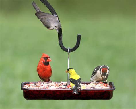 duncraft com cardinal platform feeder