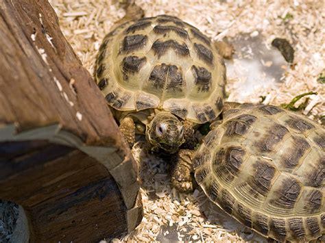 gabbie per tartarughe di terra criceti conigli tartarughe pesci e piccoli animali