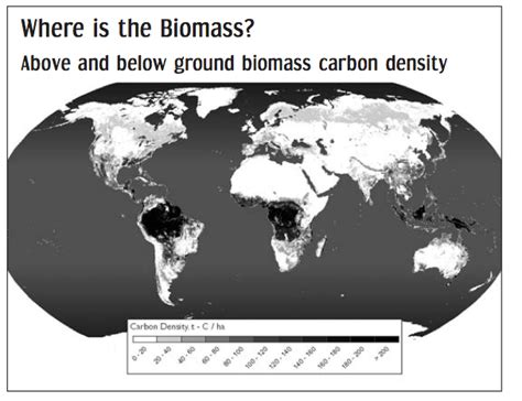 were chignons used in the 20 86 of the world s biomass is located in the global south