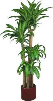 interesting indoor plants home design indoor plants low light common houseplants and best with 81 interesting images of