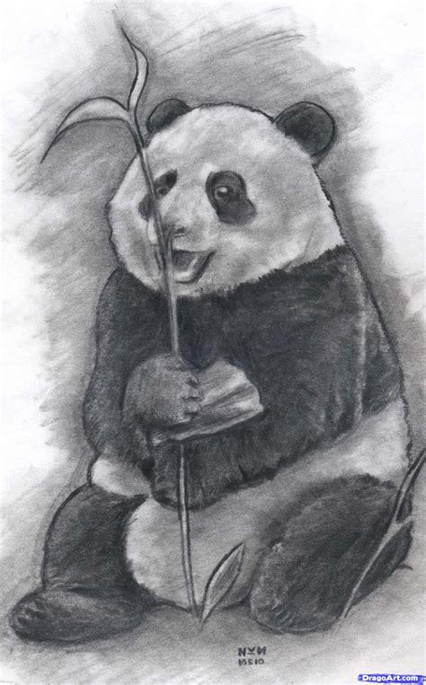 how to draw a realistic how to draw a realistic panda draw real panda step by step realistic drawing