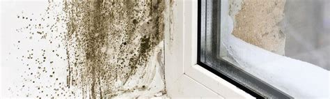 mold mites in bathroom reducing or eliminating mould in the home can be simple