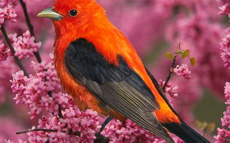 flowers on the bright feathers of birds photo wallpaper 3