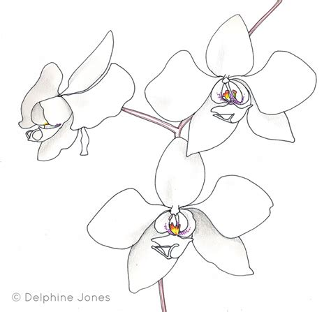 Sketch Outline by Gousicteco Orchid Drawing Outline Images