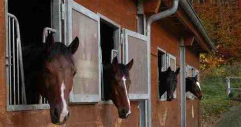 stall pferde reitanlage pferdesport winterm 252 hle