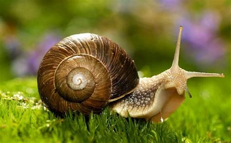 Picture Of Snail