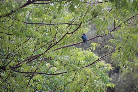 Vogelarten Im Garten by Sri Lanka Reisebericht Quot 12 11 2015 Fahrt Nach Tangalle Quot