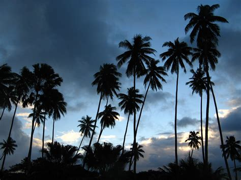 earth views fiji palm