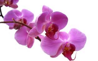 Orchids Feature Flower Friday Orchids From The Garden Of Eden
