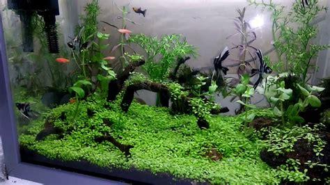 membuat aquarium aquascape mini aquascape mini youtube