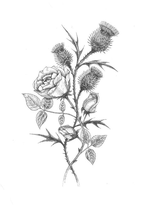rose and thistle tattoo 166 best images about and illustrations on