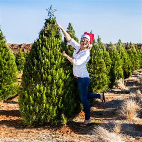 fresh christmas trees melbourne online