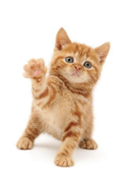 Waving Cat by Cats Protection The Cat Magazine About The Cat