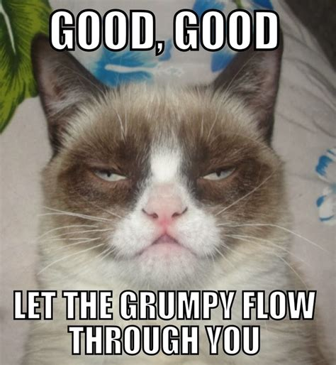 Good Cat Meme - caterville grumpy cat memes