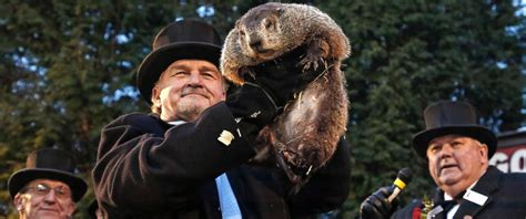 groundhog day play pennsylvania groundhog s handlers phil predicts more