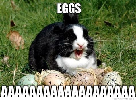Cute Easter Meme - 25 best ideas about happy easter meme on pinterest