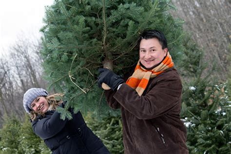 cut down christmas tree in utah top 5 pre and post thanksgiving workouts top 5 s sports exercise gateway macon