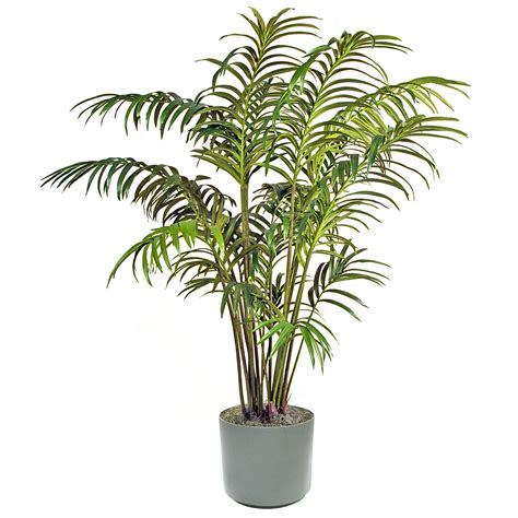 Decorative Palm Trees by Palm Tree Decorative Plant 4248511 1500x1500 All For