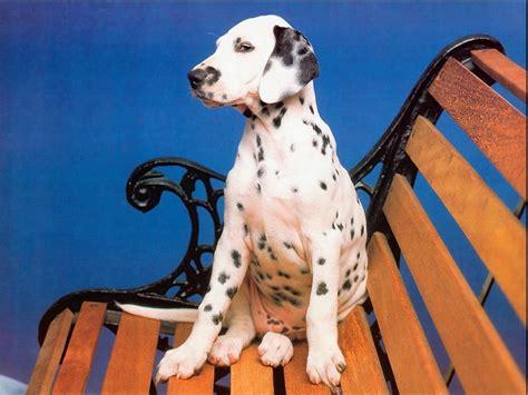 dog wallpaper dogs wallpaper 13632654 fanpop cute dog wallpaper dogs wallpaper 13936285 fanpop
