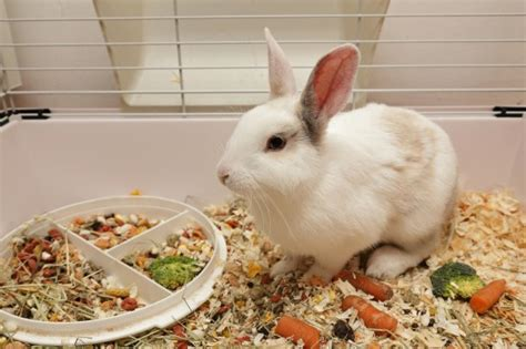 indoor garden for rabbits different ways of keeping a house rabbit pets4homes