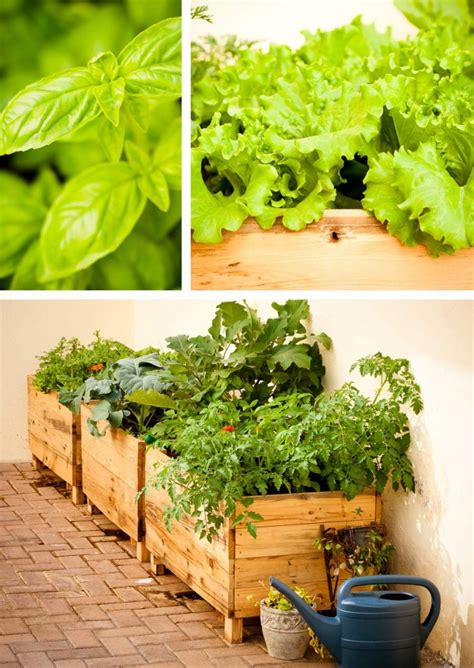 Small Vegetable Garden Archives Vegetable Gardening Growing Your Own Vegetable Garden