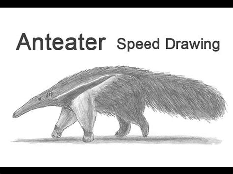 Speed Sketches Q A Update by Anteater Time Lapse Speed Drawing