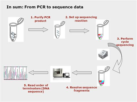 how much template dna for pcr dna sequencing what when why how who and where dna