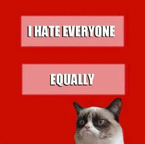 I Hate Everyone Meme - 105 best images about grumpy cat on pinterest grumpy cat