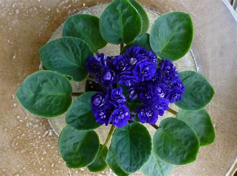 L1299 In Bloom Blue Flower Set Size S Kode V1299 crater lake leaf set not a finished plant