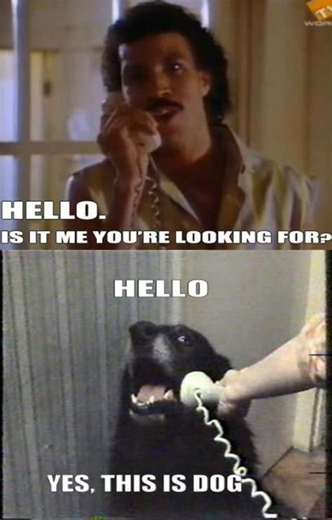 yes this is dog internet meme originated in serbian drug