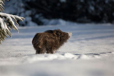 animals in the winter 19 gorgeous photographs of wild animals during winter time