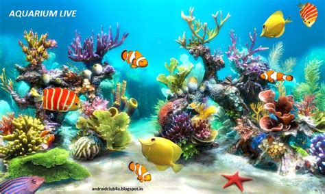 3d live fish wallpaper for pc android club4u unlimited android downloads