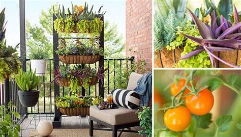 Small Garden Balcony Ideas 25 Gorgeous Vertical Garden Ideas That Are A Boon For
