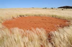 secrets  namibia fairy circles unlocked  termite