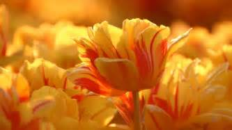 beautiful flower pictures beautiful beautiful flowers