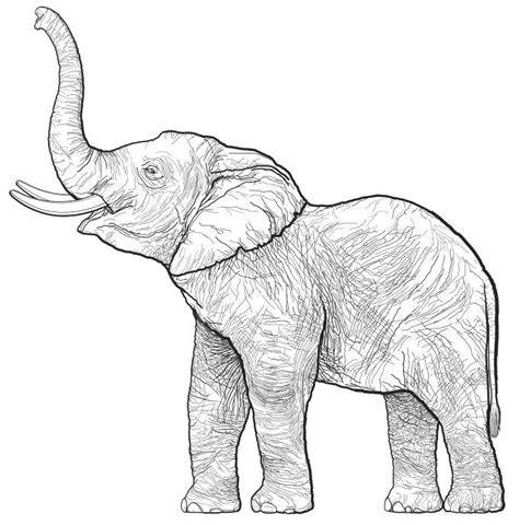 how to draw a doodle elephant the 25 best elephant drawings ideas on