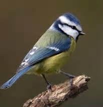 d 233 couvrons et prot 233 geons les oiseaux des jardins