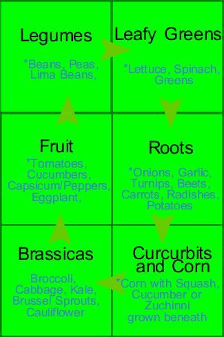 Crop Rotation Vegetable Garden Rotation Plan