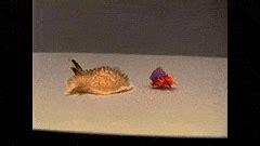 Gif Animals Science Sharks Biology Marine Biology Behavior - sea slug gifs find make share gfycat gifs