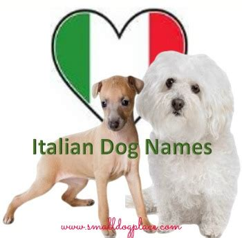 puppy in italian italian names