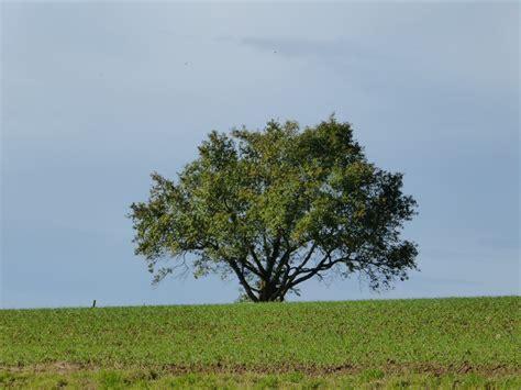 gambar pemandangan pohon alam menanam langit bidang